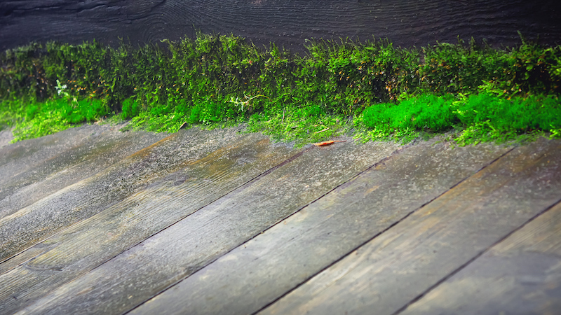 Moss Growing On A Wooden Floor