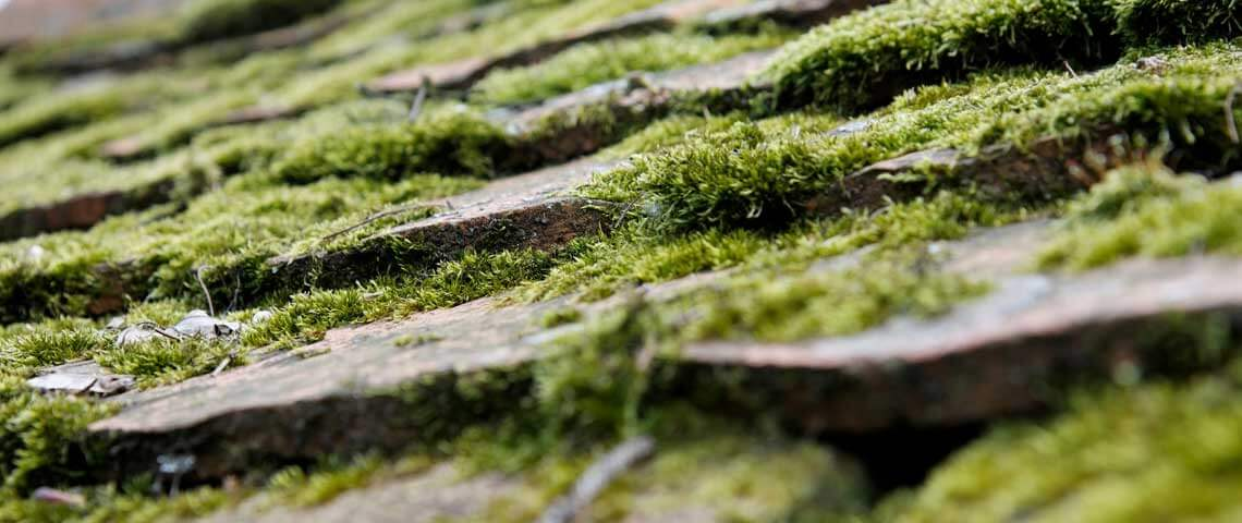 Structural moss can damage roofs and lead to extensive repairs.