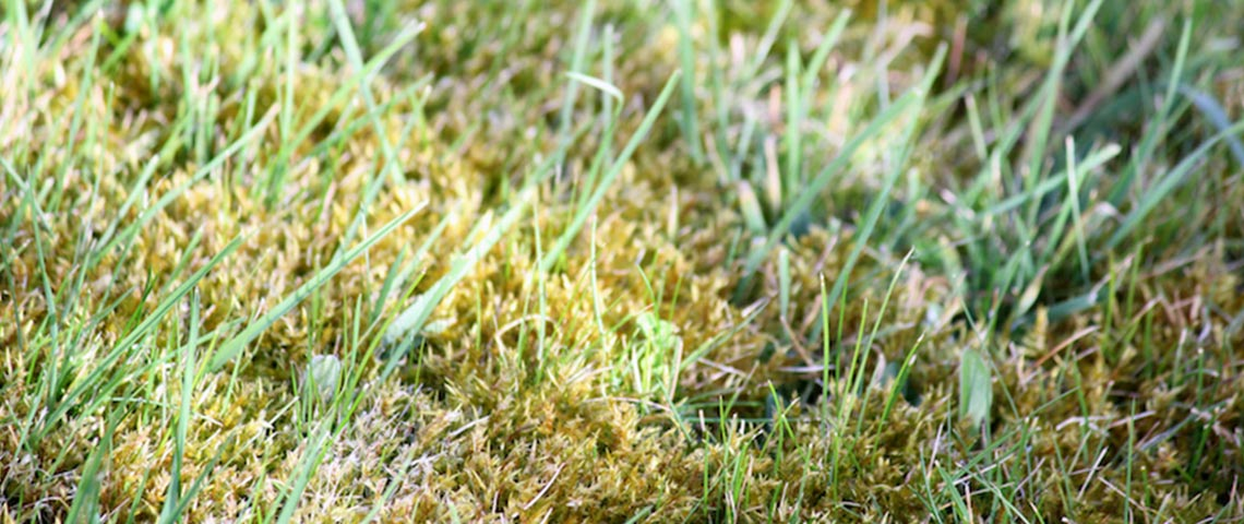 How To Kill Lawn Moss And Keep It Gone