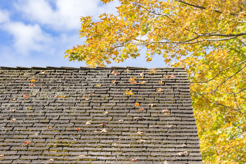 old-roof-covered-with-autumn-leaves-from-tree
