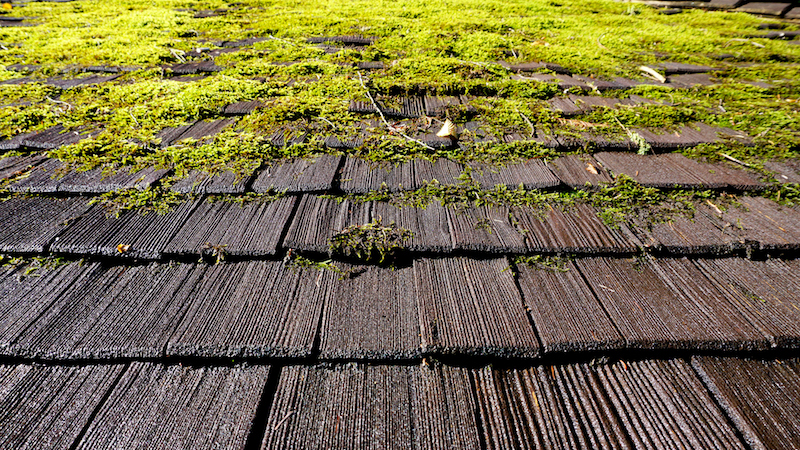 moss spreading on roof in cracks - How To Kill Moss On Roof