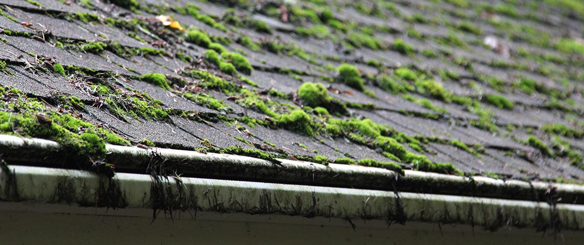 How To Kill Roof Moss